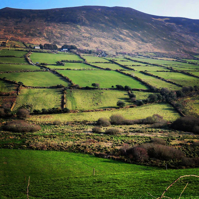 Dublin to Dingle road trip - green fields