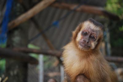 Primate del centro de Bolivia
