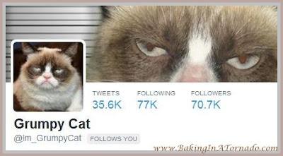 Grumpy Cat twitter follow | www.BakingInATornado.com