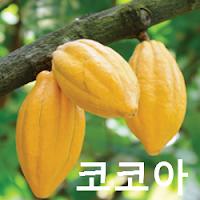 코코아 (원두) 가격 전망 : 해외선물, 코코아 선물 매매기법 투자전략, Cocoa ICE: CC Futures (1 톤/달러)