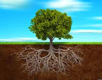 60% raíz, 40% copa
