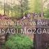 Kalandjaink a román gúnyhatáron - HVIM videó