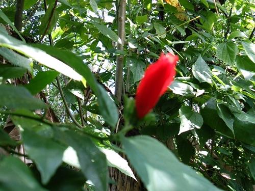 本来いろいろなフルーツや木の実を食べるジャコウネコに無理矢理コーヒー豆だけを与える過酷な飼育環境