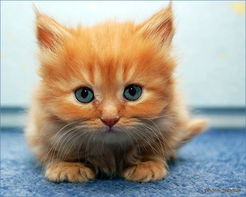 It's HD | Animals-Funny-Wallpapers: cute baby kittens