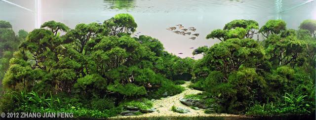 foto aquascape yang cantik menarik dan menakjubkan