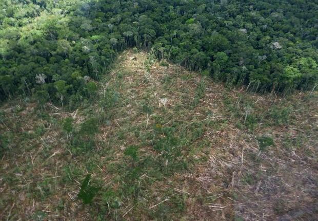 Um estudo publicado recentemente acrescenta evidências ao argumento de que o desmatamento na Amazônia ajuda na disseminação da malária.