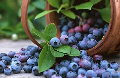arandanos para adelgazar, frutas para adelgazar