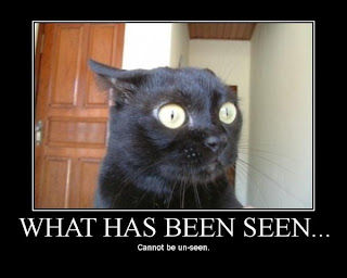 what has been seen cannot be unseen funny surprised cat