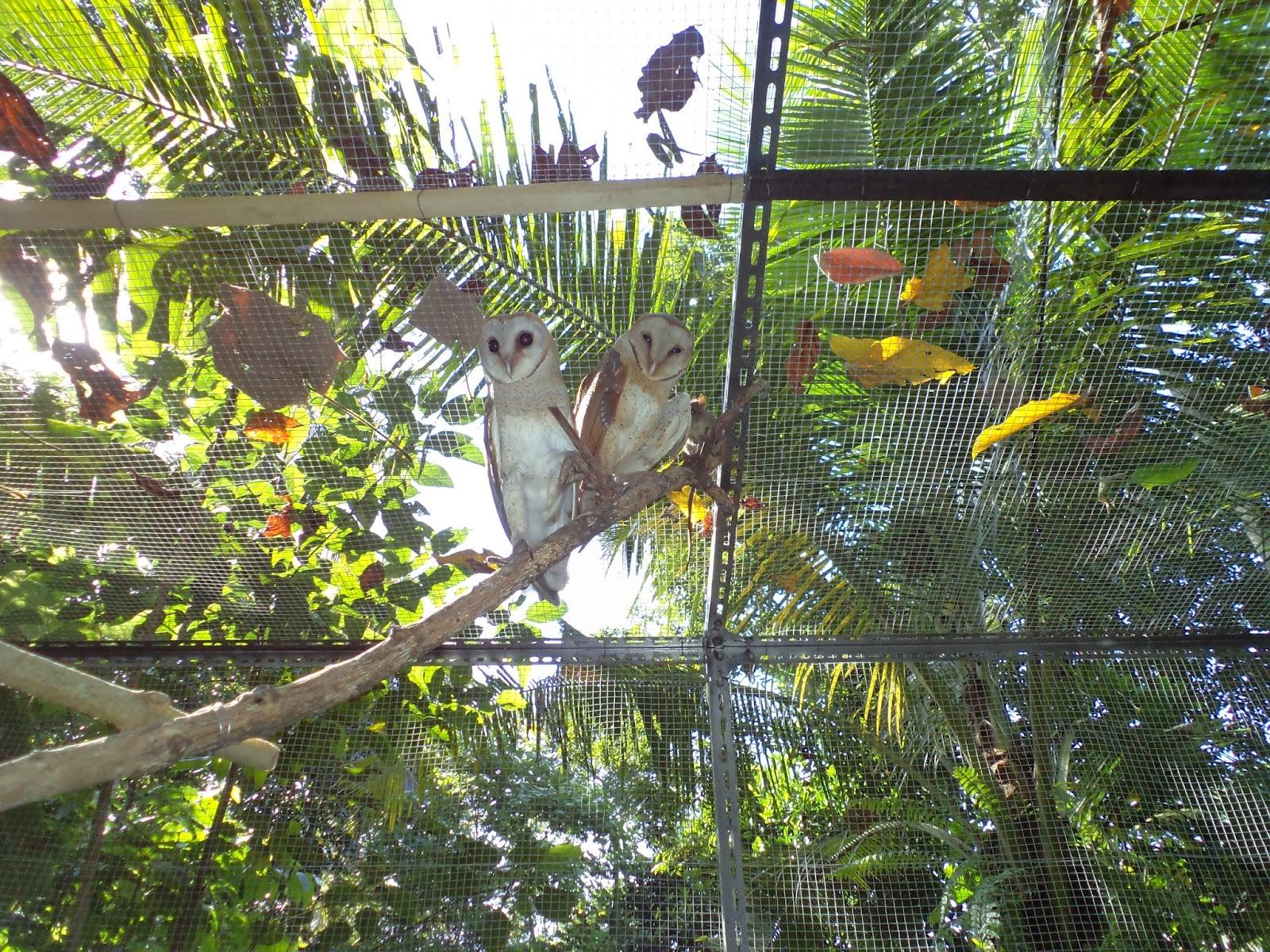 Ukuran Kandang Burung Hantu - Tentang Kolam Kandang Ternak