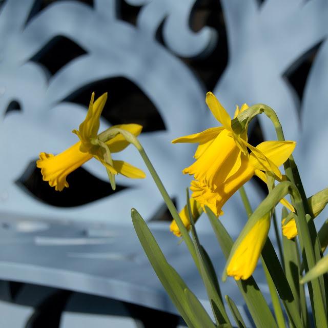 Lente Narcis Peeping Tom
