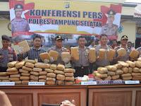 Gagal Edarkan ke Jakarta, Ratusan KG Ganja Kering Diamankan Polisi