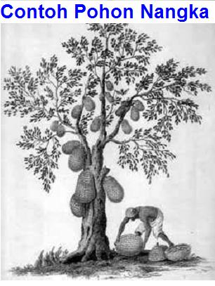 Gambar Pohon Psikotes : gambar, pohon, psikotes, Contoh, Psikotes, Gambar, Pohon, Benar, Penjelasan
