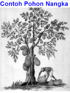 contoh psikotes gambar pohon yang baik dan benar