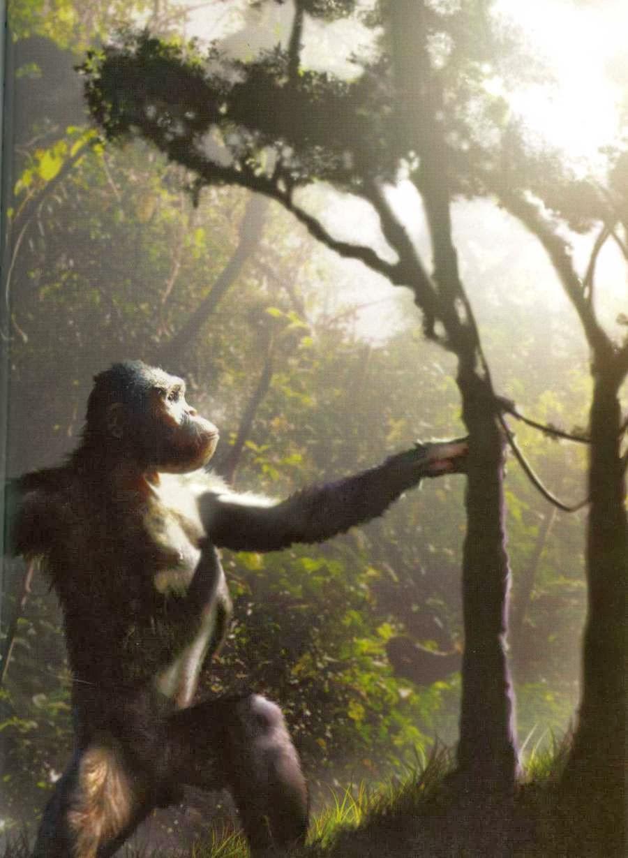 Evolutionary Tree Man