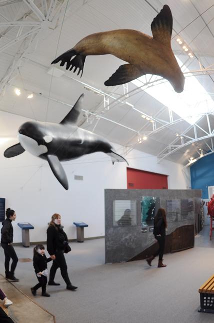museo ecocentro puerto madryn muestra  de Peninsula Valdes