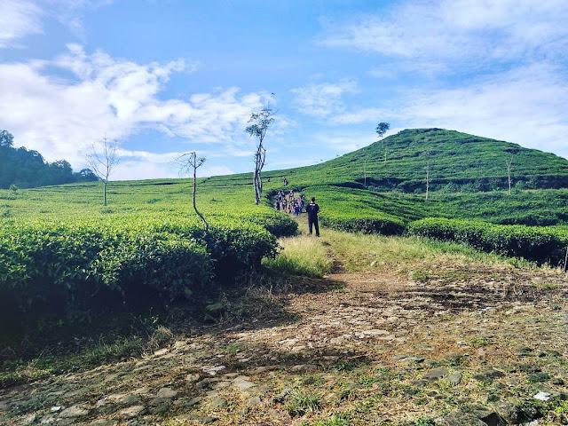 Kebun Teh Medini, Agrowisata Menyejukkan di Lereng Gunung Ungaran