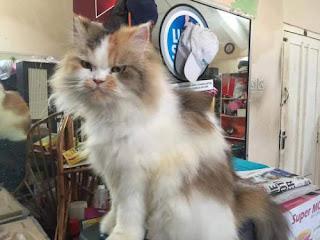 Nama Kucing Jantan / Betina, Lucu, Bagus, Unik, dan Imut