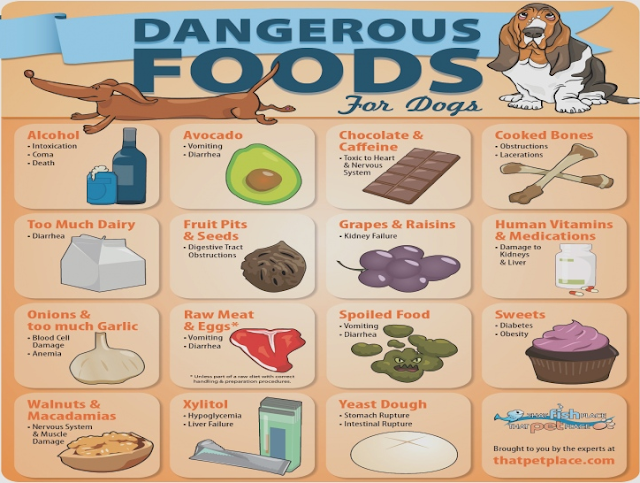 Dangerous Dog Treats What To Know Before You Treat Your Pup