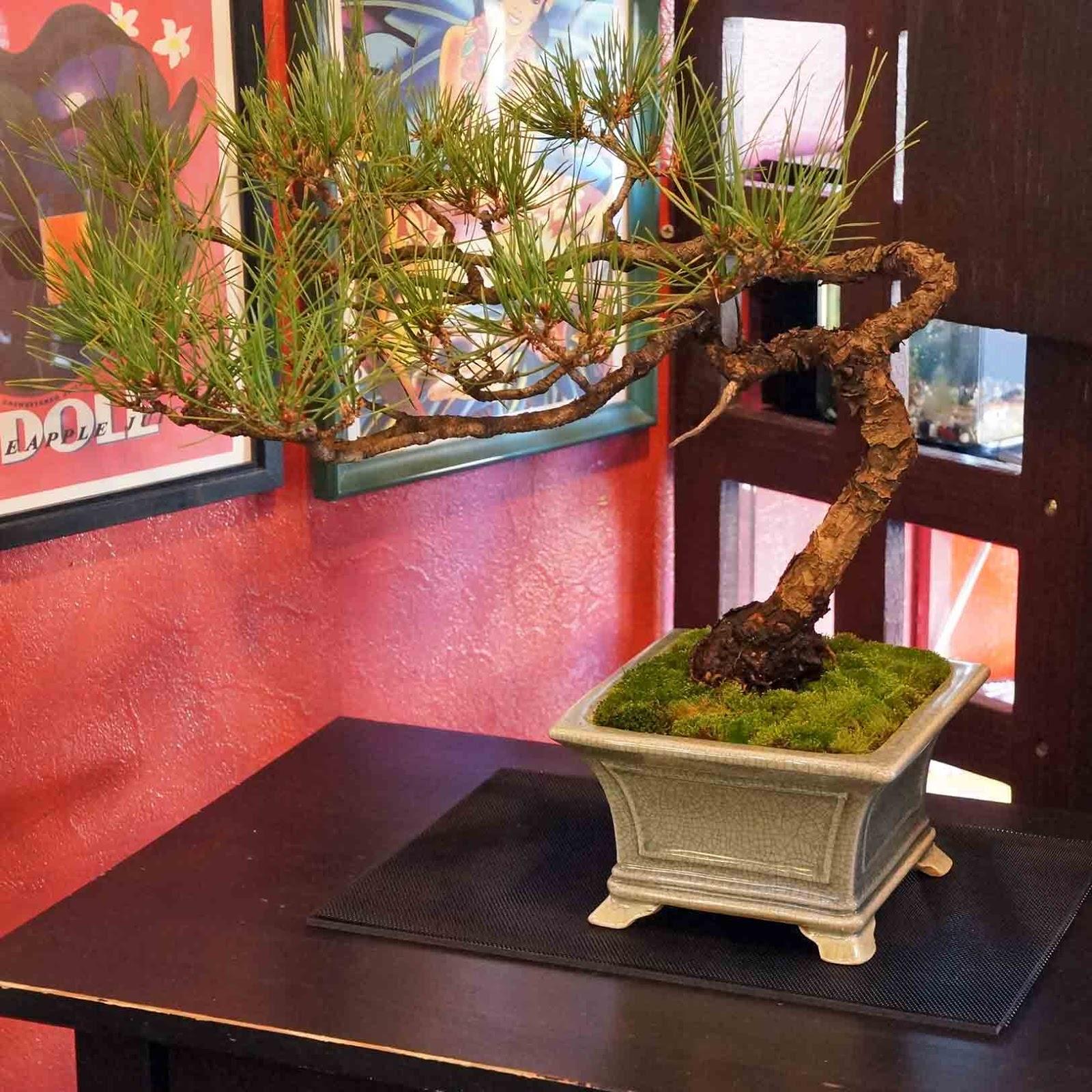 For Your Small Japanese Garden By YUKIMONO
