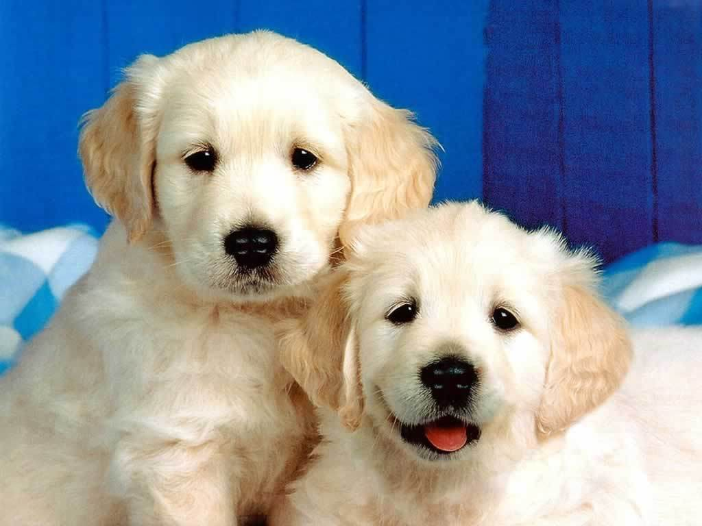 HD little cute dogs