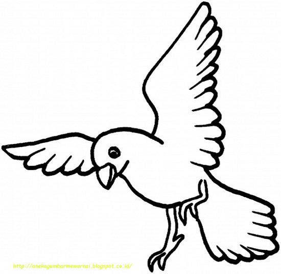 Download 54 Foto Gambar Burung Untuk Anak Tk  Paling Keren Gratis