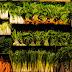 A importância das fibras para a flora intestinal