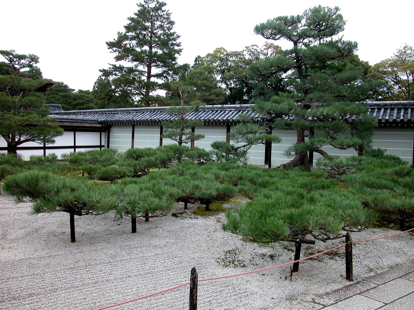 Robert Ketchell S Blog Pines In The Japanese Garden
