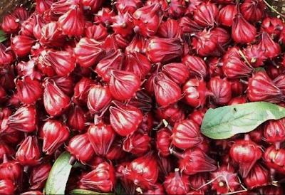 tác dụng của hoa atiso đỏ