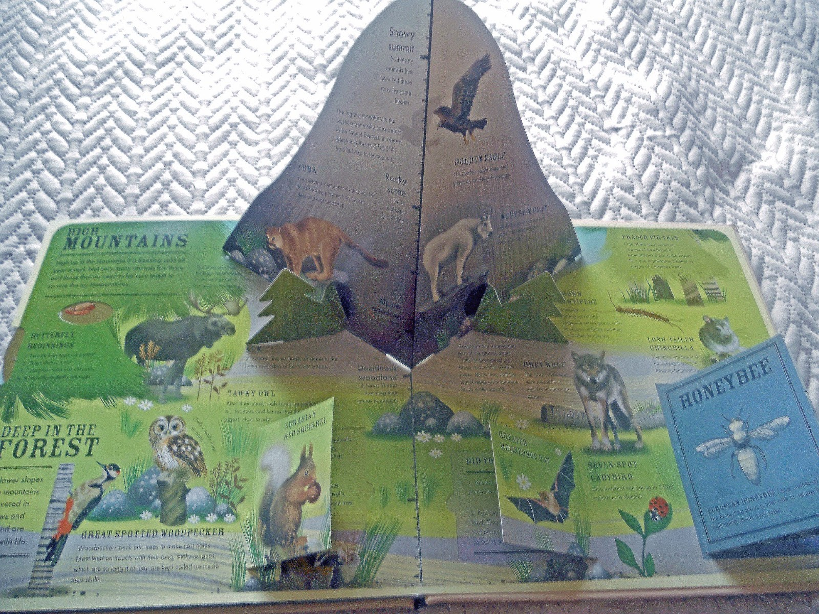 Missus bs picture book reviews wilderness an interactive atlas of beautifully illustrated the animals and plants are represented in their true to life form in an array of soft colours the book is a sturdy build with gumiabroncs Image collections