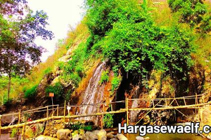 Harga sewa elf ke Cirebon