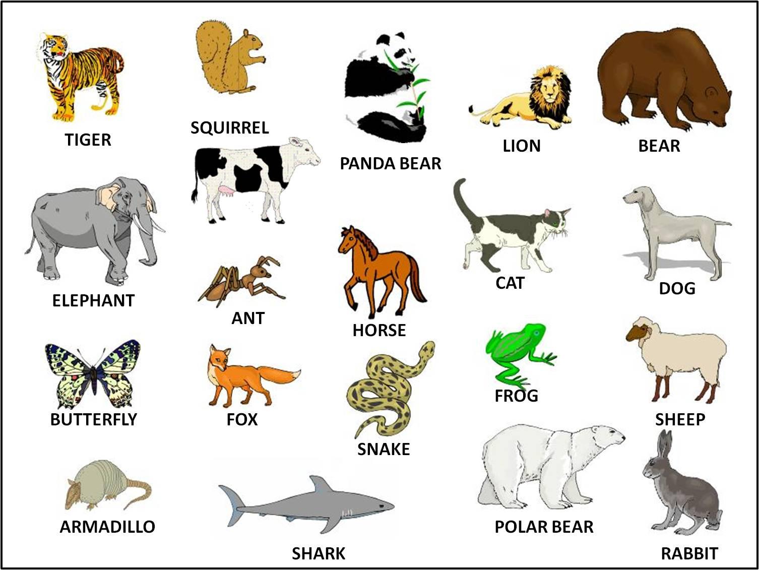 animals wild information animal