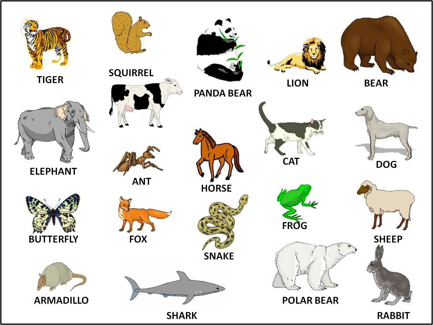 Funny English Learning The Name Of The Animals