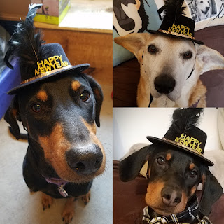 rescue dog new year hats puppy doberman
