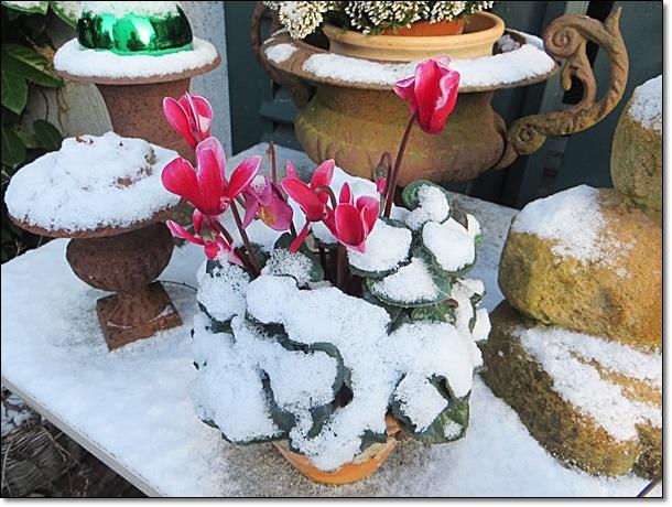 Neues vom lindenhof winterzauber im advent for Gartendeko im winter
