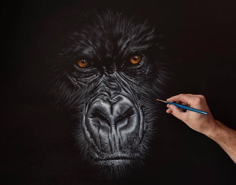05-Gorilla-Richard-Symonds-www-designstack-co
