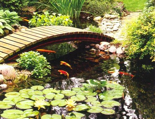 Marycot estanques de tranquilidad for Koi pond small