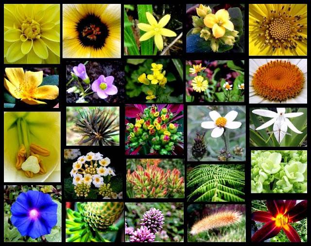biodiversidade-natureza-plantas-flores