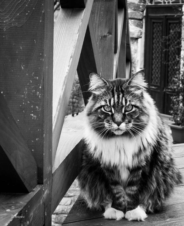 rudolf gatto