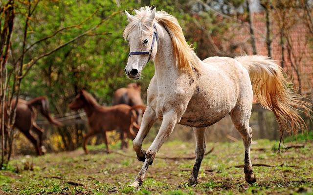 Foto van een mooi wit paard