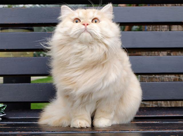 Foto Kucing Cantik