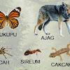 Kumpulan Nama Nama Hewan Dalam Bahasa Sunda