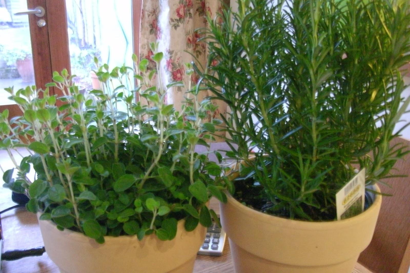 52 Projects Week 9 Making A Herb Garden Planter