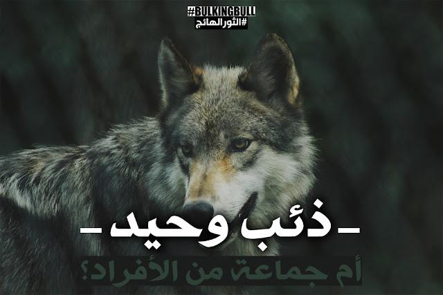 ذئب وحيد أم جماعة من الأفراد؟