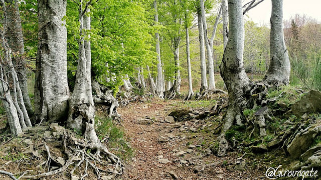 trekking orsigna sentiero terzani