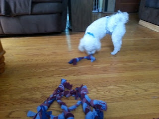 Image: Dexter immediately came over to check out the new toys