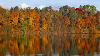 Meer en gekleurde herfstbomen