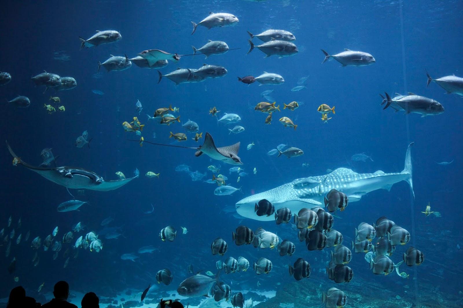 crowds are mesmerized by the massive Georgia Aquarium