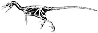 Sistema óseo del dinosaurio Velociraptor