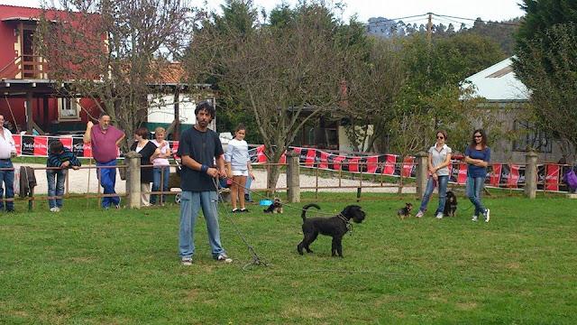 Pablo, de Guicca, durante una jornada de modificación de la conducta canina celebrada en la localidad cántabra de Cianca. Foto: Guicca.