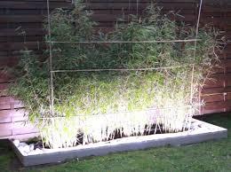 Bordure de jardin design | bon plan jardin